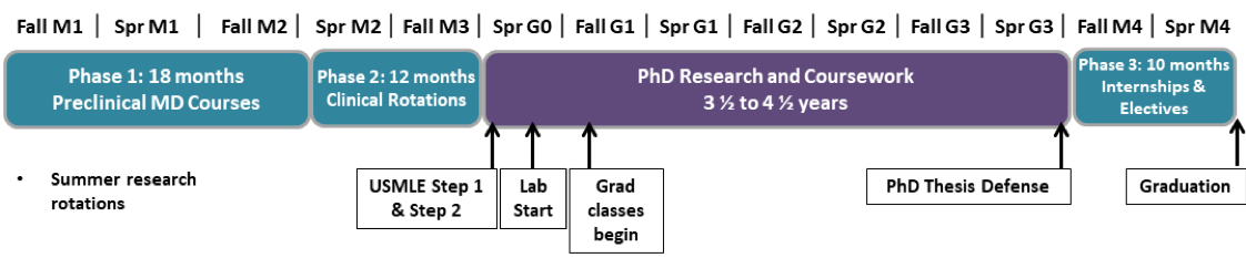 MD-PhD timeline