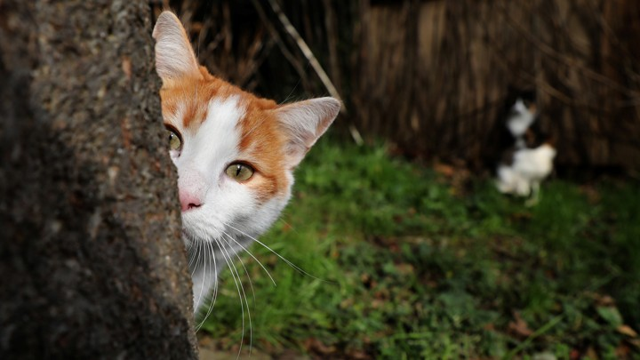 A cat sits behind a tree in Istanbul, Turkey